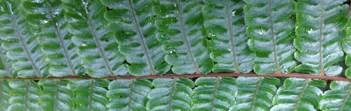 Unique flora Madagascar