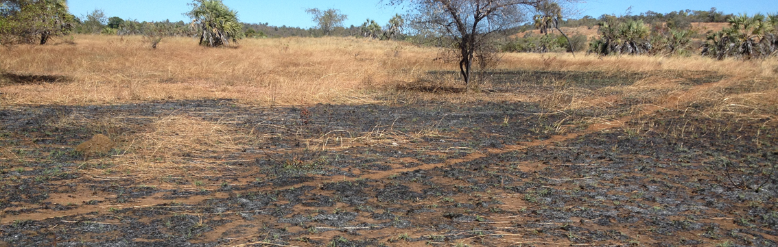 Environmental destruction in Madagascar has reached a critical stage