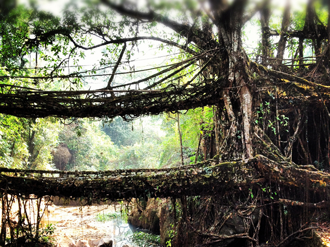 Designing with nature - double decker root bridge