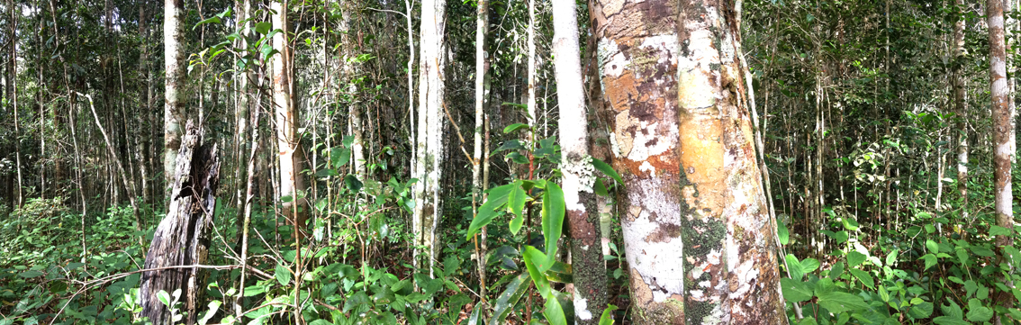 Forests are crucial to preserve the Earth's biodiversity