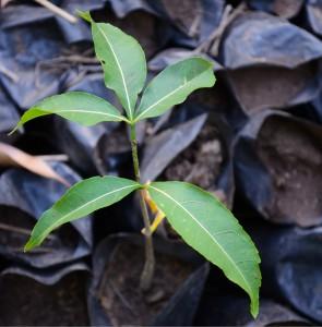 Planting Hope:Madagascar 2013:Art With Benefits:Cuschieri Design