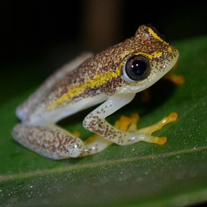 Tree Frog:Madagascar 2013:Art With Benefits:Cuschieri Design