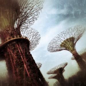Supertree Grove, Singapore