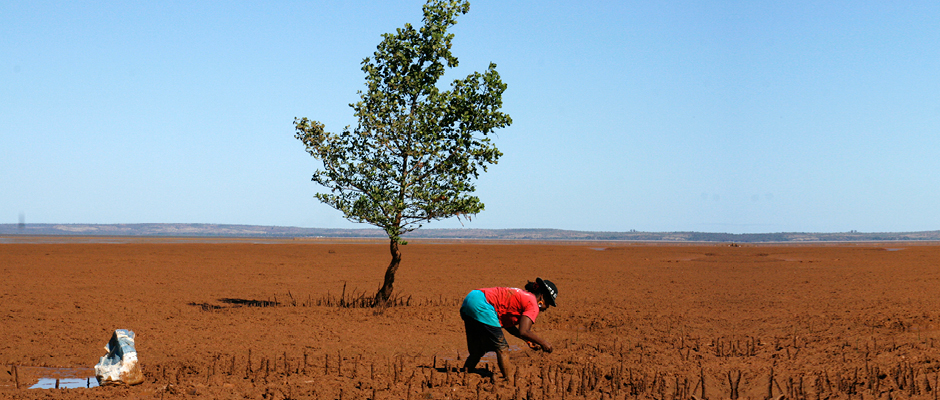 Reforestation Madagascar